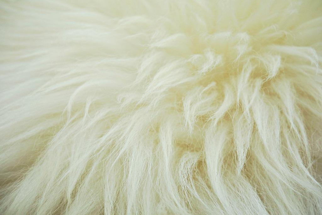 Шерсть белой горной собаки