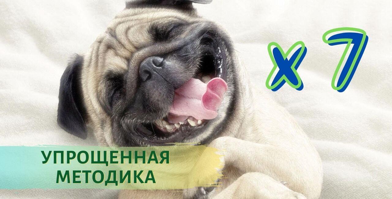 Как считается возраст у собак