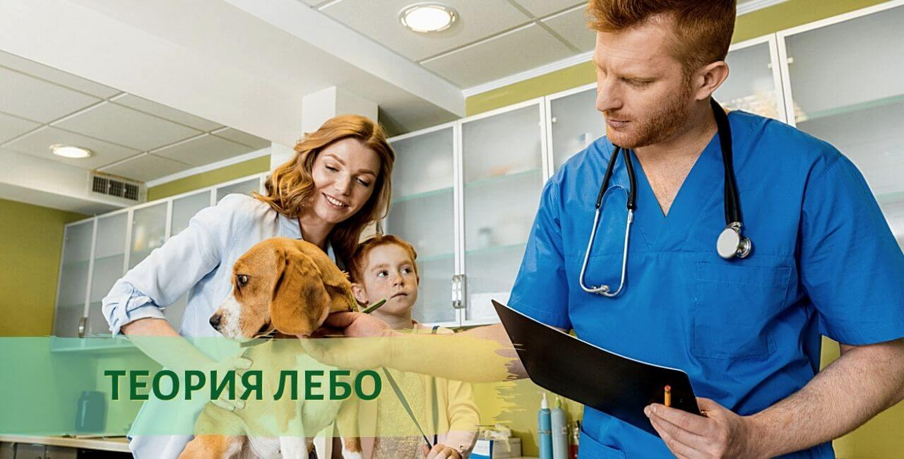 Возраст собаки по человеческим меркам - Теория Лебо